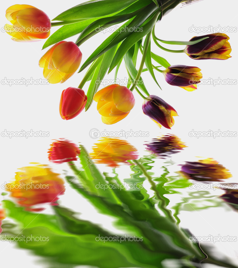 Fresh elegant tulips with water reflection  — Stock Photo #9982688