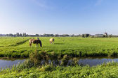 Farm fields in Holland — Stock Photo
