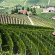 Vineyard fields in Piedmont, Ital — Stock Photo