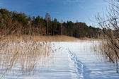 Rural pond during winter time — Stock fotografie