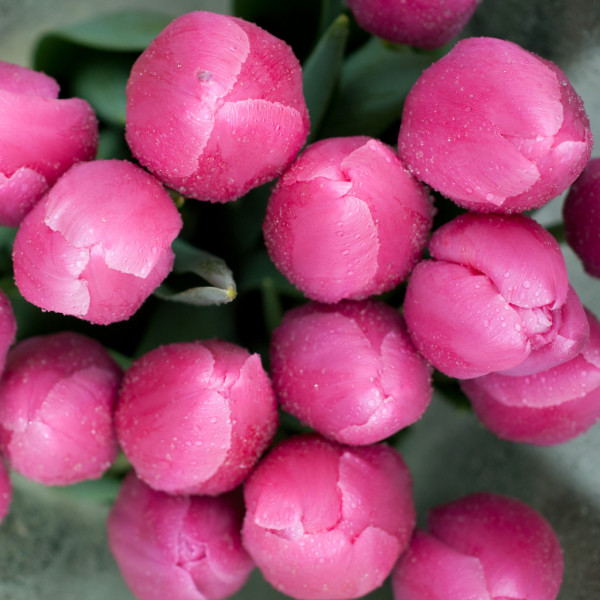 Pink tulips — Photo