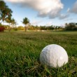 Golf ball lies on rough beside fairway of tropical florida cours — Stock Photo #9644171