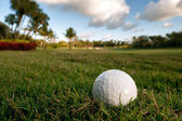Golf ball lies on rough beside fairway of tropical florida cours — Stock Photo