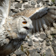 Eagle owl — Stock Photo #10103381