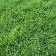 Green grass background — Stock Photo #10225480