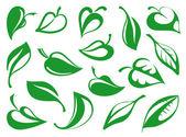Feuilles de plantes — Vecteur