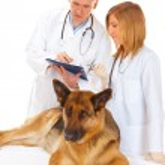 Two vets examining dog — Stock Photo