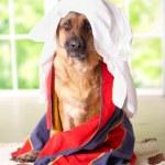 Dog in towel — Stock Photo