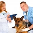 Two vets examining dog — Stock Photo #9735920