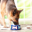 Dog eating from bowl — Stock Photo