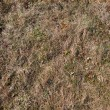 Seamless texture of old grass - Stock Photo