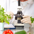 Researcher with GMO vegetable in the laboratory - Stock Photo