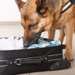 Постер, плакат: Sniffing dog chceking luggage