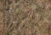 Seamless texture of old grass — Stock Photo