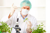 Researcher holding up a GMO plant in the laboratory — Stock Photo