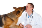 Vet with dog — Stockfoto