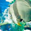 Underwater panorama — Stock Photo #9727204