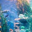 Underwater panorama — Stock Photo #9727293