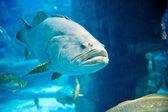 海龟,珊瑚礁和鱼类的水下全景 — Stock Photo