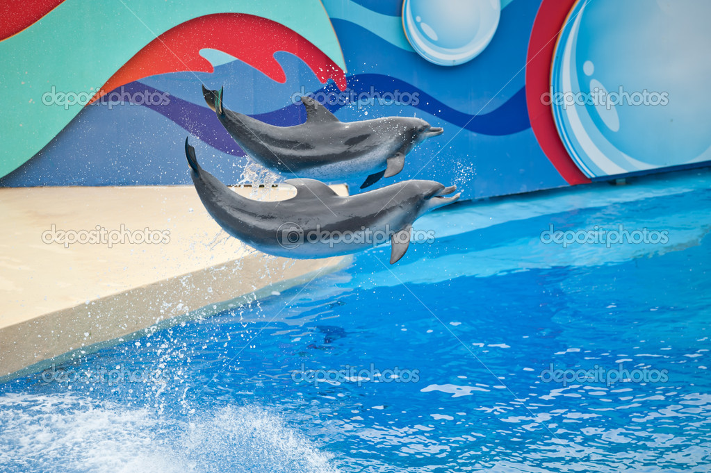 Hong Kong's Ocean Park dolphin performances — Stock Photo #9727996