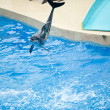 Stock Photo: Hong Kong's OcePark dolphin performances
