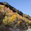 Sichuan, China, autumn leaves on the plateau - Stock Photo