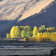 Western China, autumn trees xinduqiao — ストック写真 #9845595