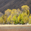 Western China, autumn trees xinduqiao — Stock Photo