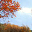 Sichuan, China, autumn leaves on the plateau — Stock Photo