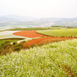 Red land, yunnan province, China — Stock Photo