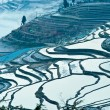 ChinYunnan, Yuanyang terraced color — Stock Photo #9918616
