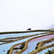 China Yunnan, Yuanyang terraced color — Stock Photo