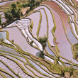 ChinYunnan, Yuanyang terraced color — Stock Photo #9919448