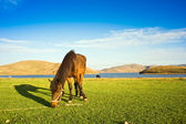 Highland pasture horse — Stock Photo