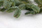 Christmas pine tree branches on snow — Stock Photo
