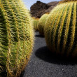 Cactus land — Stock Photo