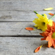 Stock Photo: Orange and yellow flower