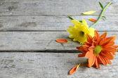 Orange and yellow flower — Stock Photo