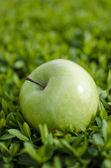 Green apple on grass — Stock Photo