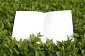 Paper in green grass — Stock Photo