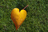 Heart shape leaf — Stock Photo