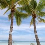 Coconut tree with hammock on white beach — Stock Photo