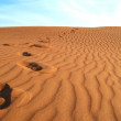 Footprints in the golden sand — Stock Photo