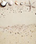 Conchas de mar con fondo de arena blanca — Foto de Stock