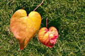 Heart shape leaves — Stock Photo