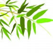 Green bamboo leaves — Stock Vector