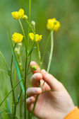 Yellow flowers with a hand — Stock Photo