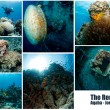 Collage of underwater images — Stockfoto