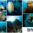 Collage of underwater images — 图库照片