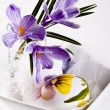 Painted eggs and crocus on Easter — Stock Photo #9771394